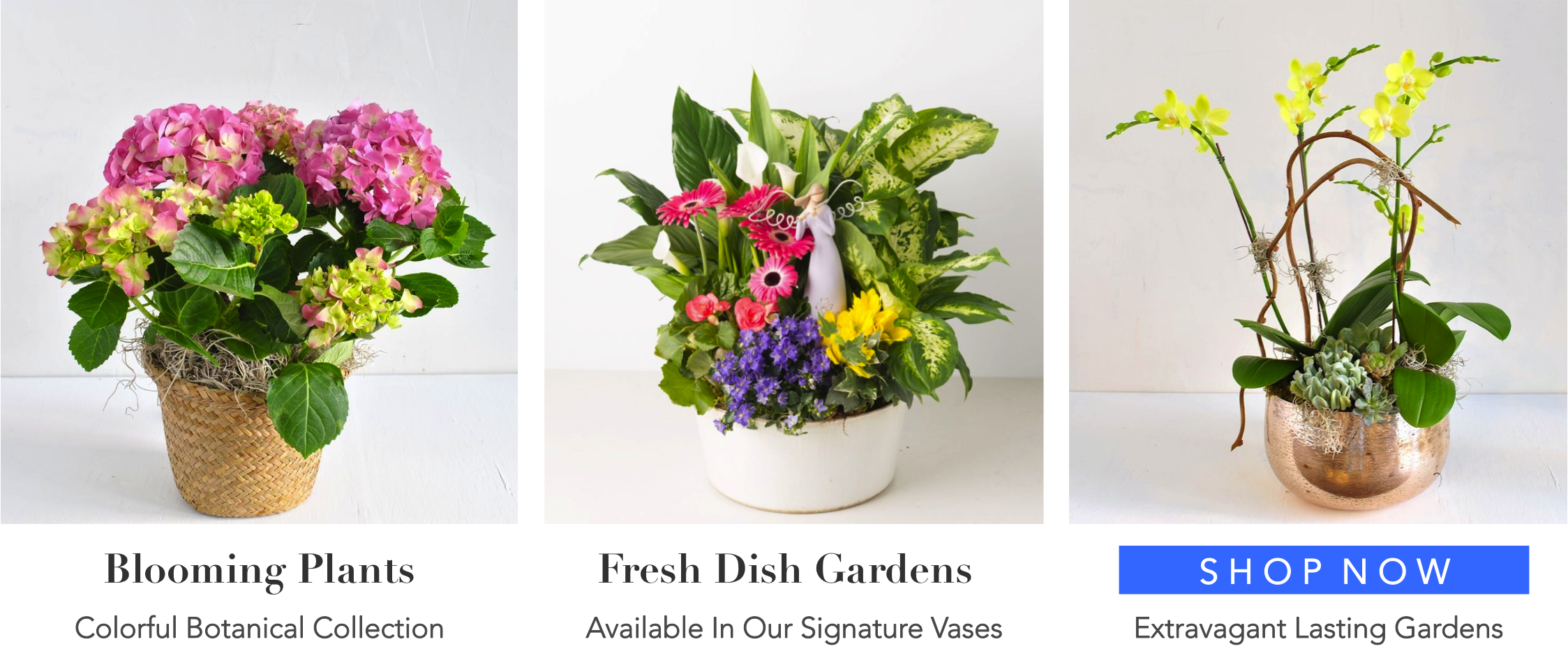 0-angies-floral-design-fresh-plants-dish-gardens-79912-handcrafted-gifts-same-day-delivery-roses-flowershop-el-paso-texas-79912-shop-online-flowers-florist-best-florist.png