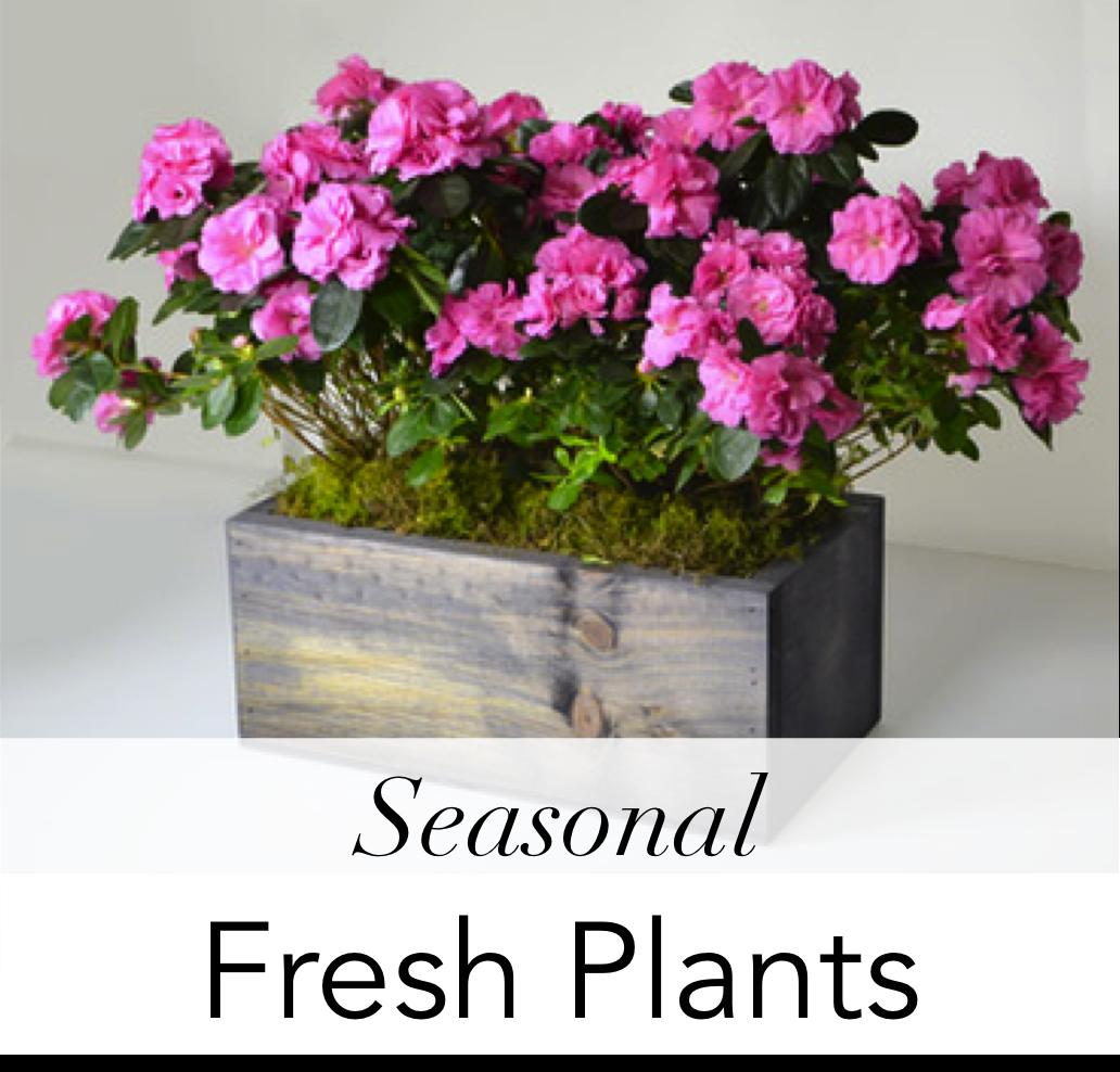 01-angies-florals-7-9912-plants-love-el-paso-texas-flowershop-79912-angies-flowers-.png