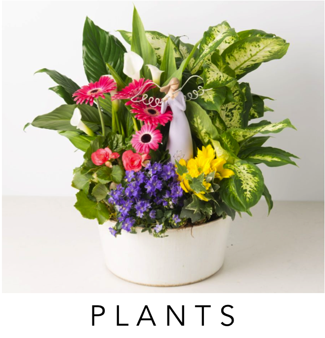 01-angies-plants-dishgardens-plants-telefloral-ftd-proflowers-dish-gardens-same-day-delivery-3-floral-designs-el-paso-florist-texas-el-paso-flower-shop-worldwide-shopping-ftd-teleflora-flower-delivery-79912-best-florist-luxury-flowers-el-paso-.png