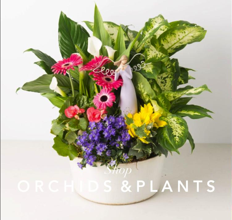 angies-floral-designs-plants-floral-coupon-lilies-roses-best-seller-flowers-el-paso-florist-79912-weddings-.png