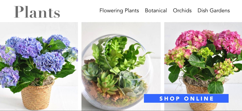 plants-succulents-flower-plants-angies-floral-designs-el-paso-florist-texas-79912-angies-flowers-el-paso-texas-angies-plants-dish-gardens-potted-vases-.png